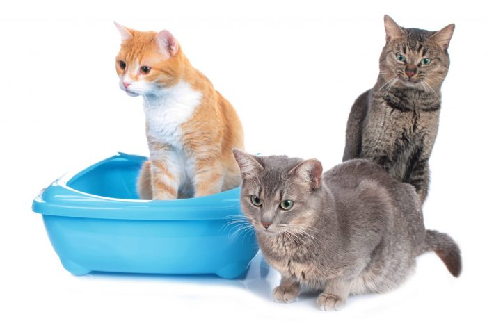 How to Clean a Litter Box in an Apartment (3 Steps to a ...