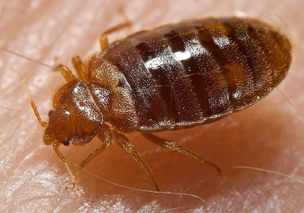 Can UV C Light Kill Bedbugs